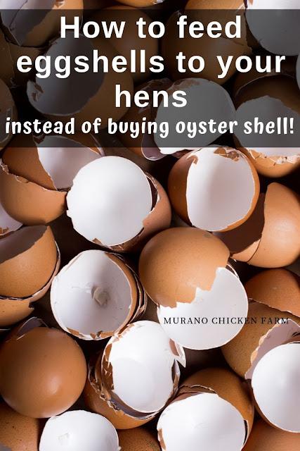 Feeding eggs shells to chickens