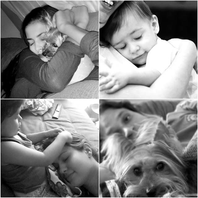 semelhanças entre cachorros e bebês