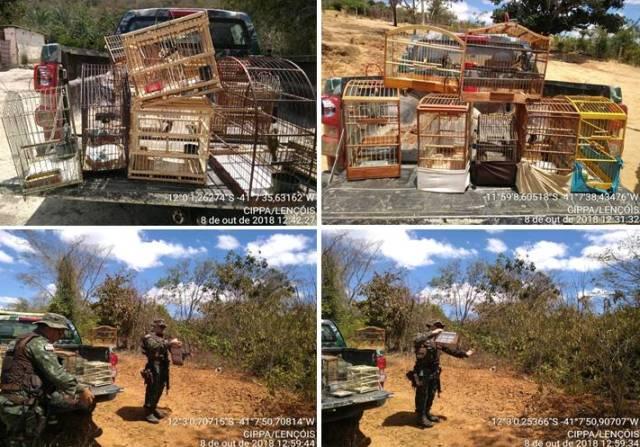 Cippa Lençóis resgata aves silvestres criadas ilegalmente, em Utinga