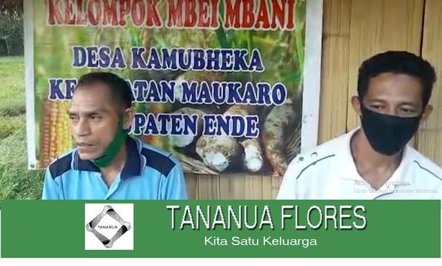 Cerita Inspirasi dari Kelompok Tani Mbei Mbani