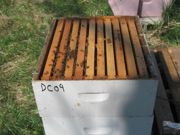 Άσχημα αποτελέσματα μετά από θεραπεία θυμόλης: Λάθη που σκοτώνουν μελίσσια...