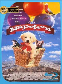 Napoléon (1995)HD [1080p] Latino [GoogleDrive] SilvestreHD