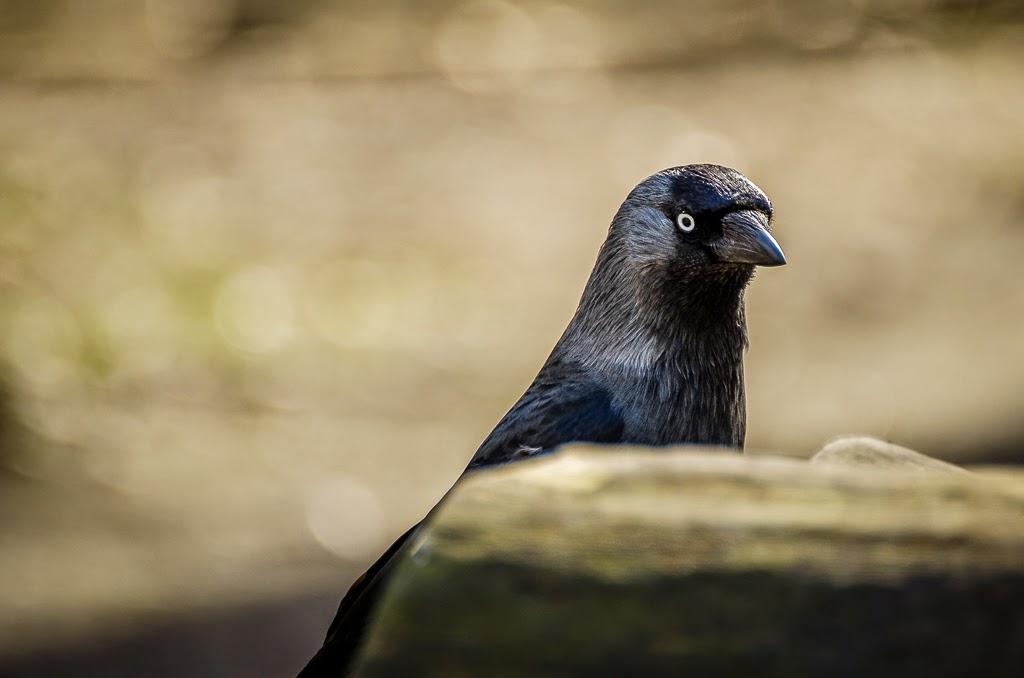 http://1.bp.blogspot.com/-64wELXfC37Q/U0QurXu2VXI/AAAAAAAADls/Z5H0GCLWNPc/s1600/bird3.jpg