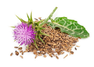 Learn About the Awesome Health Benefits of Milk Thistle Silymarin