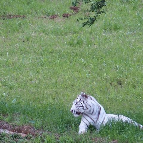 cantabria.cabarceno.animales.blog.viajes