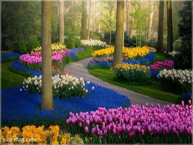 صور ورد 7 | Flowers Photos 7