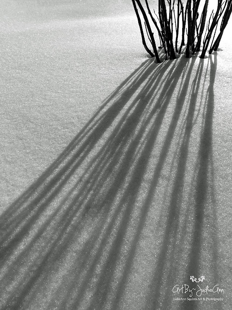 Shadows In Snow Photo