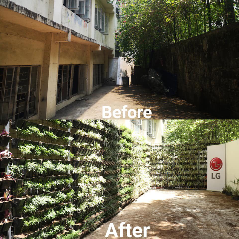 Before and After photo of LG's Green Living Wall