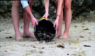 releasing turtles in Jamaica