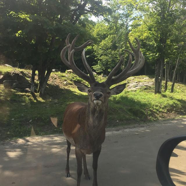 Parc Omega cervidés animaux faune