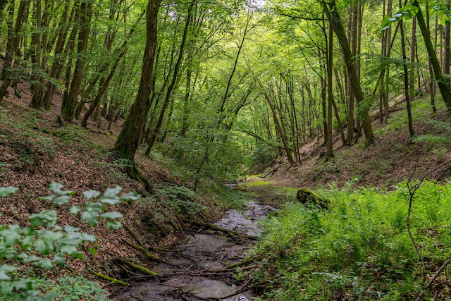 Traumschleife Baybachklamm | Saar-Hunsrück-Steig | Wandern Kastellaun | Premiumwanderweg Hunsrück 03