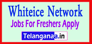 Whiteice Network Recruitment 2017 Jobs For Freshers Apply