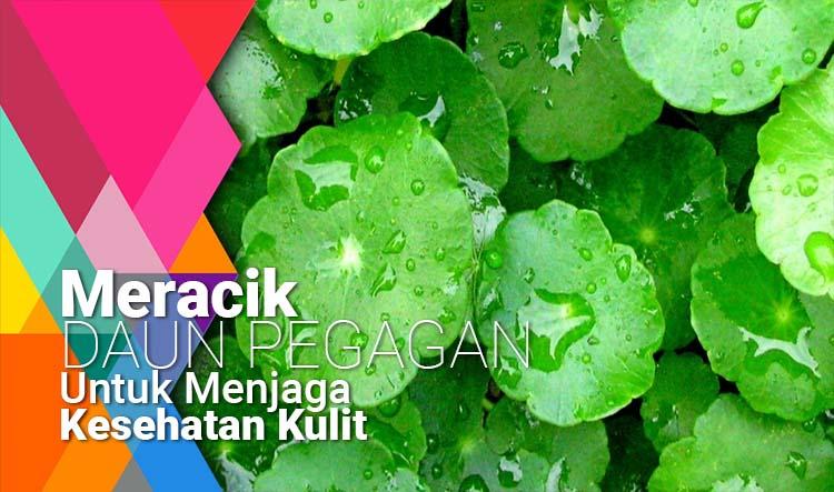 Meracik daun pegagan untuk menjaga kesehatan kulit