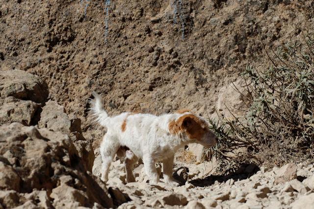 Wanderung mit Hund auf Gran Canaria  (C) Jan-Timo Schaube Fotografie