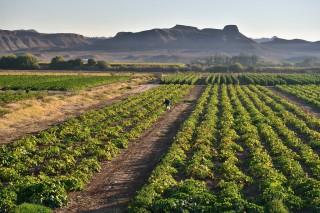 Kumpulan Kosakata Pertanian dan Perkebunan Dalam Bahasa Inggris Kumpulan Kosakata Pertanian dan Perkebunan Dalam Bahasa Inggris