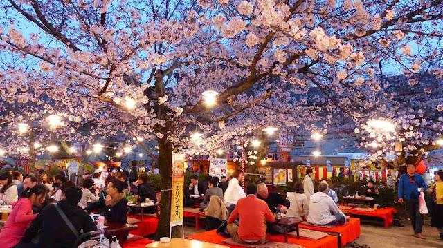 taman ueno tempat terbaik melihat bunga sakura