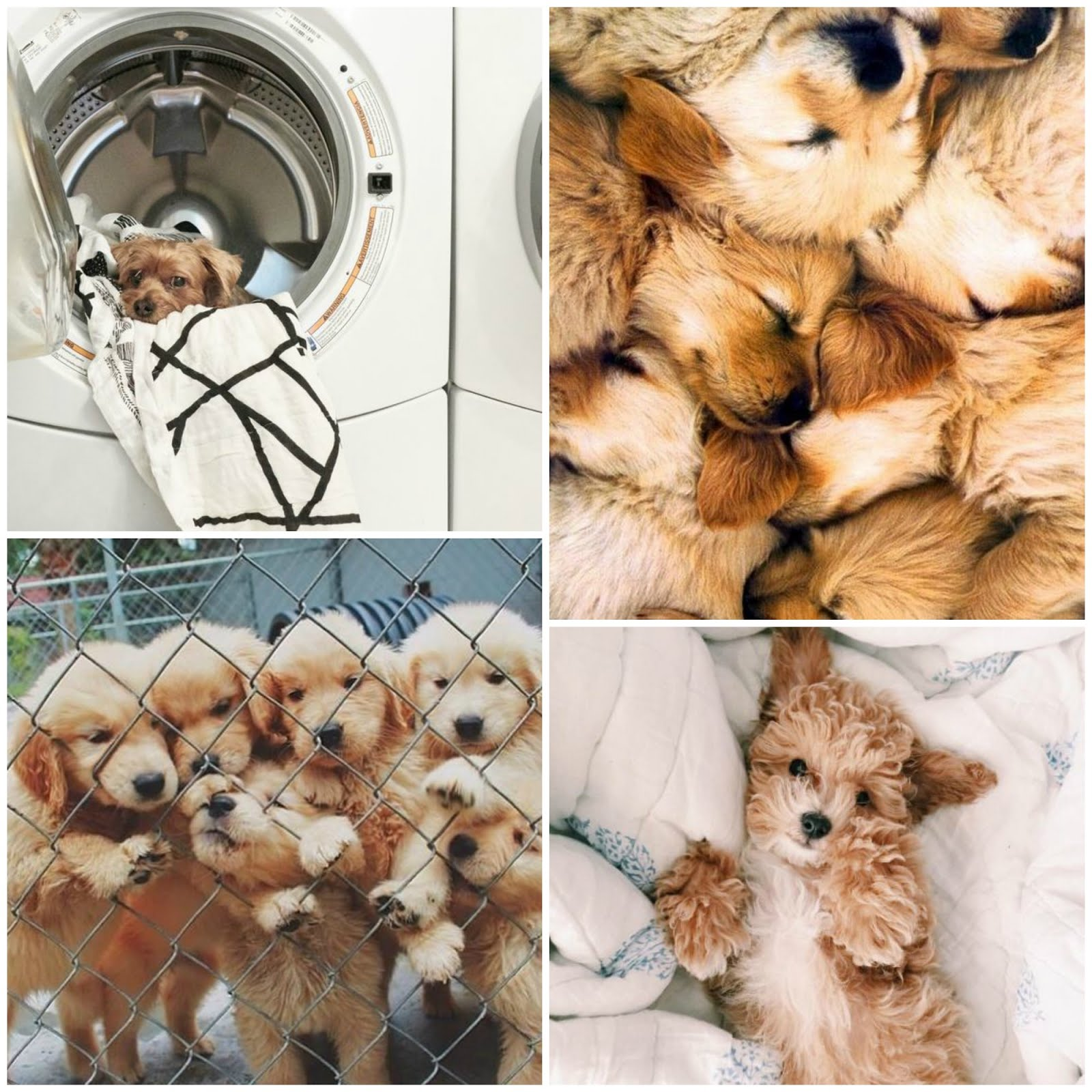 Pinterest: Cute Puppies