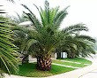 Uses Of Palm Trees