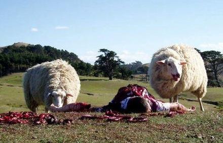 black-sheep%281%29.jpg