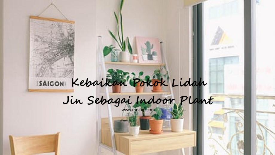 Kebaikan Pokok Lidah Jin Sebagai Indoor Plant