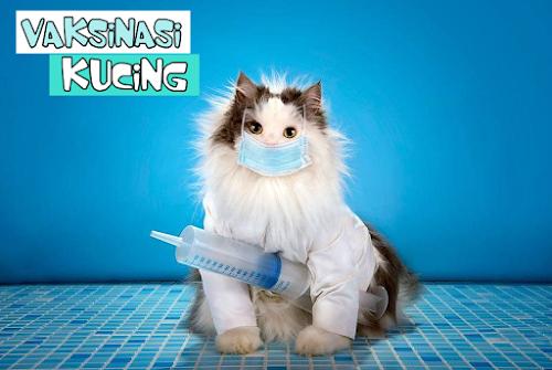 Vaksin Kucing Sendiri