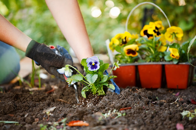 Getting Ready to Plant Flowers