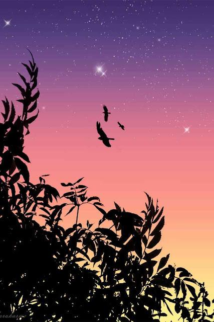 اجمل صور طيور جميلة في العالم 2020 ، صور العصافير روعة خلفيات طيور hd