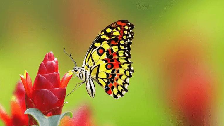 Puisi Kebahagiaan Cinta tiada lagi luka