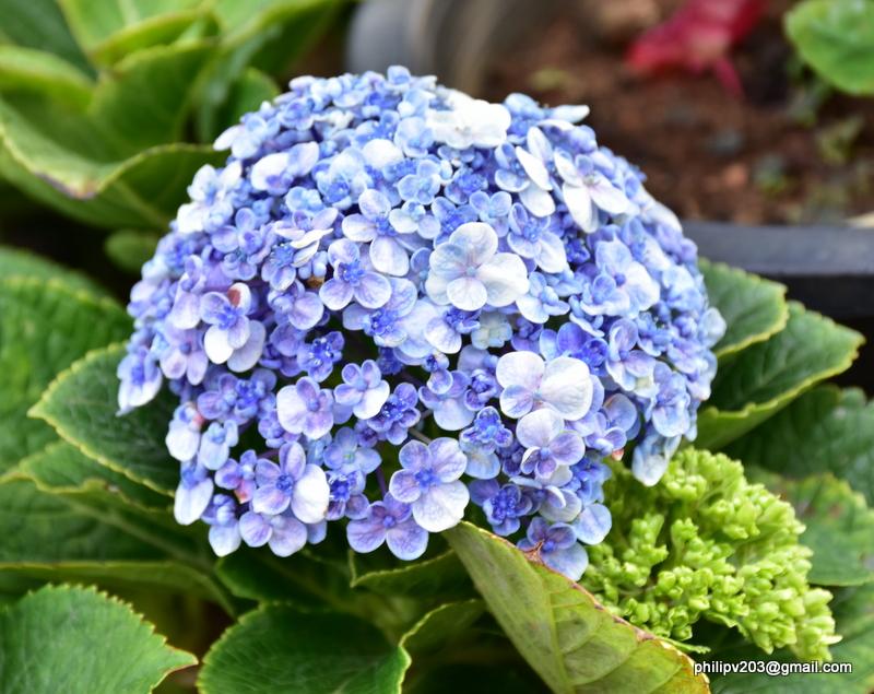 Images of sri lanka on spot flower plants for