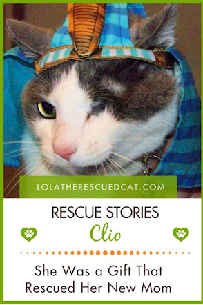 cat rescue stories