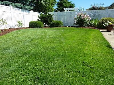 quintal-com-grama-verde-bem-aparada