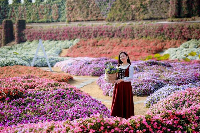 Thung lũng hoa Hồ Tây - vườn hoa khổng lồ đẹp nhất Hà Nội