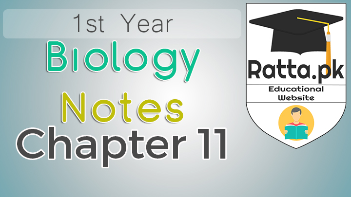 1st Year Biology Notes Chapter 11 Bio Energetics - 11th Class Bio Notes