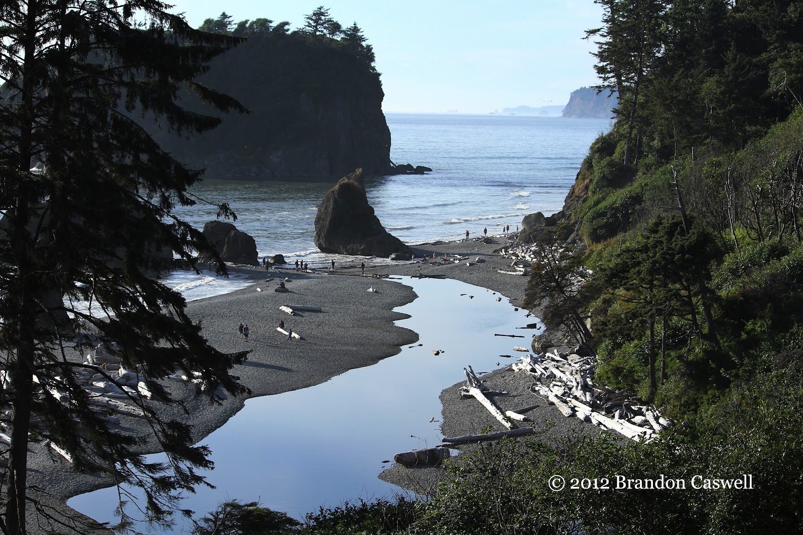 Brandonbirds Washington And Oregon 2012 Ruby Beach