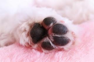 almofadas de cães