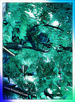 Fudge's Luscious Leafy Selfie ©BionicBasil® Puzzle
