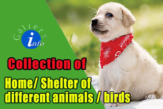 Shelter of different animals and birds