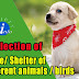 Collection of Home of different Animals || Shelter of different birds
