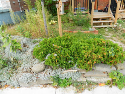 East York Toronto Front Garden Cleanup Before by Paul Jung Gardening Services--a Toronto Gardening Services Company
