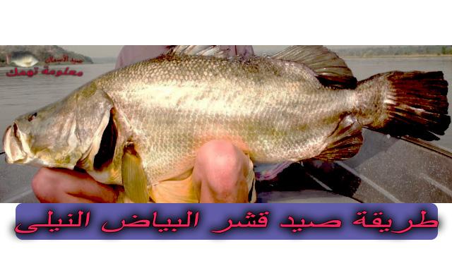 طريقة صيد سمك قشر البياض النيلي   سمك قشر البياض