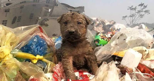 Dog Dumped during a dustcart Finds Loving Family He Deserves