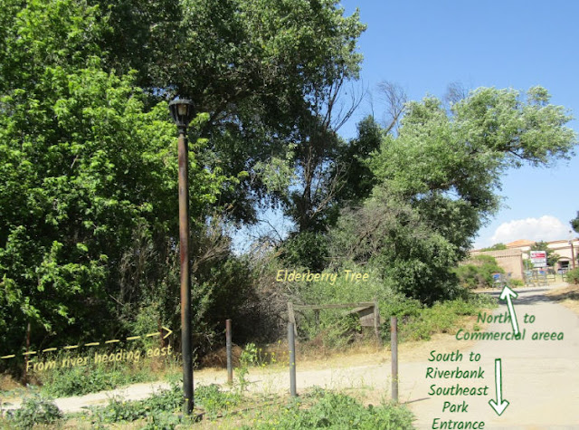 """""""Larry"""" Moore Park in Paso Robles: A Photographic Review - Intersecting Trails"""