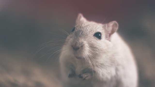 إسعافات عضة الفأر التي يجب ان تتعلمها