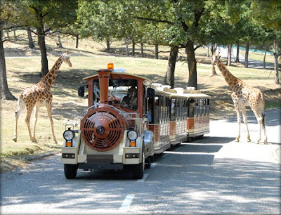 In trenino oppure in auto:Ecco come visitare l'area animali.