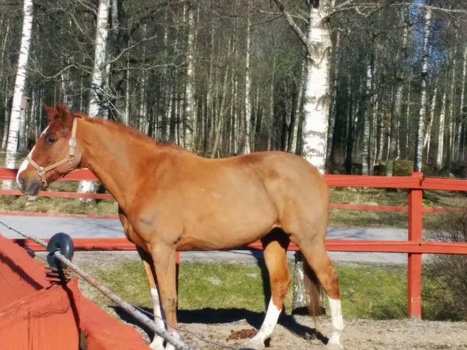 Foderjäst till häst