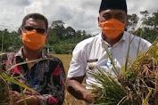 Bupati dan Ketua DPRK Aceh Singkil Panen Padi Dengan Petani