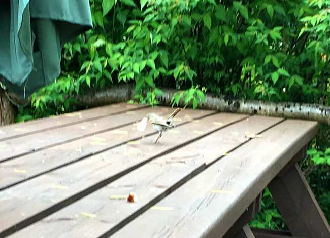 bird on table taking bread