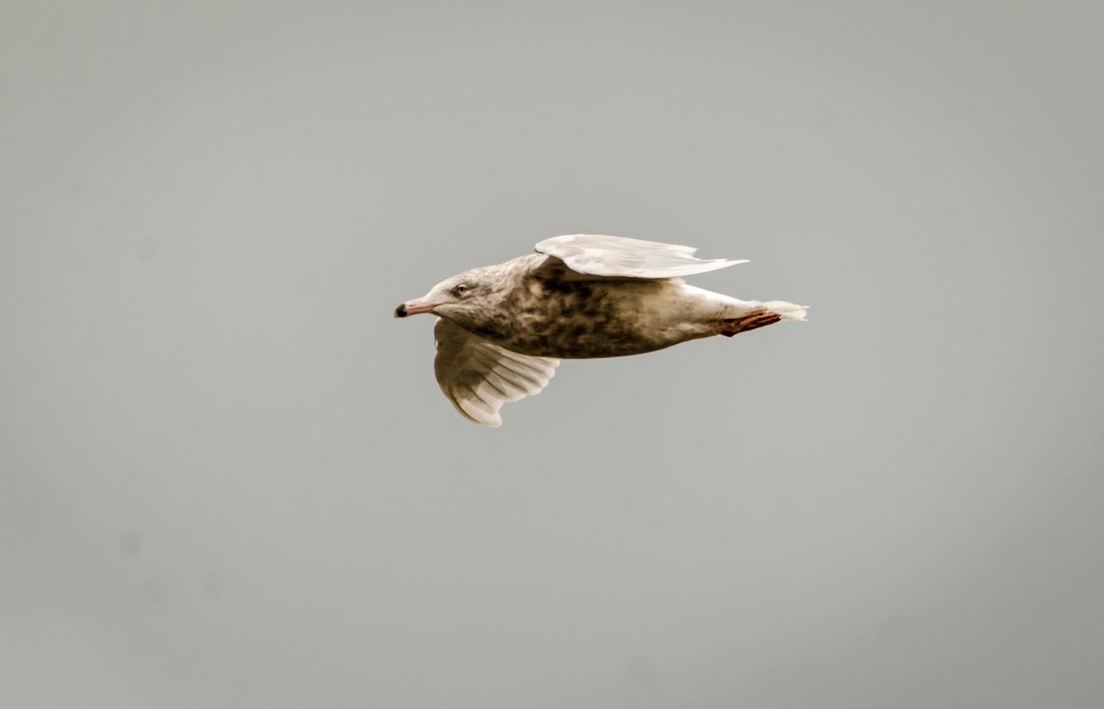 svettitel svalbard spitzberg randonnée oiseaux