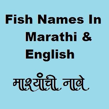 Horse Mackeral fish name in Marathi