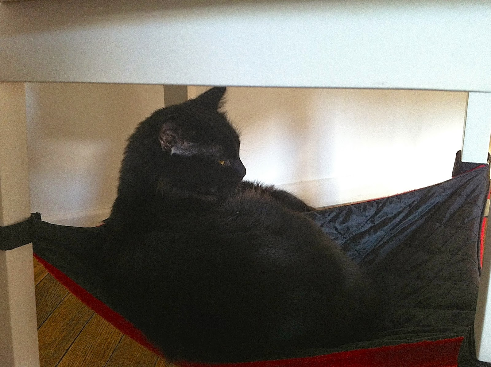 a black cat at the cat cafe